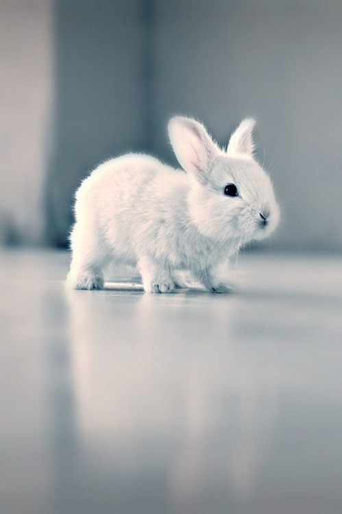 White Baby Bunny with Blue Eyes - Very Cute Baby Bunny Pet ... |Awesome Baby White Bunnies