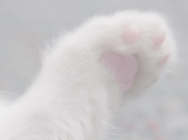 pastel, cats, paw and paws
