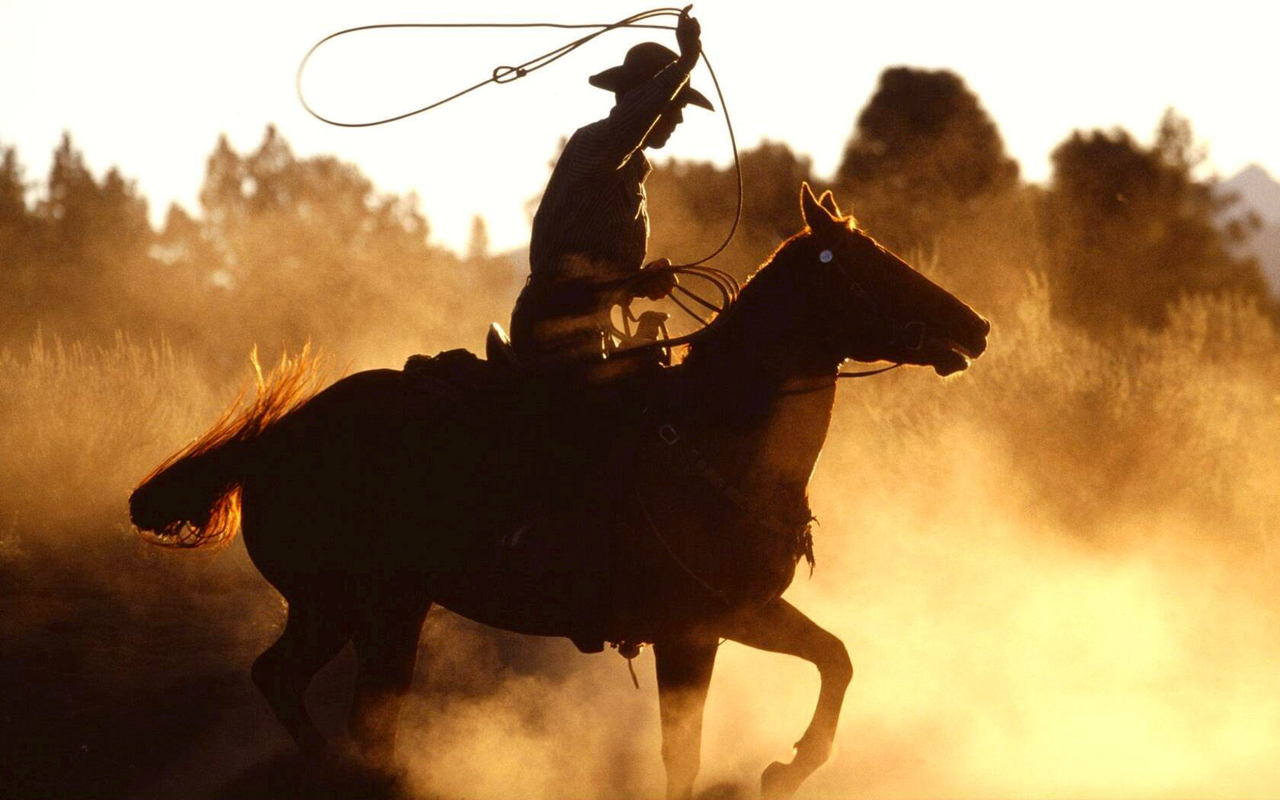 beautiful, cowboy, horse, western