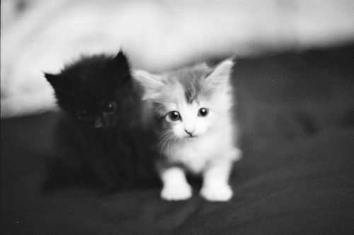 black, cat, cats and cute