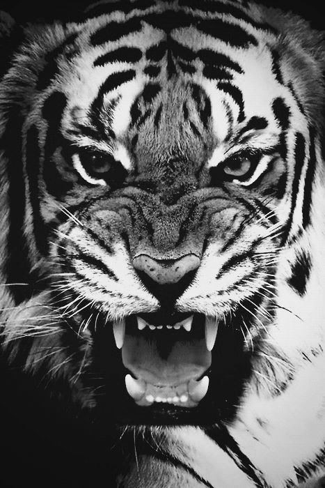 Tiger tumblr background - photo#45