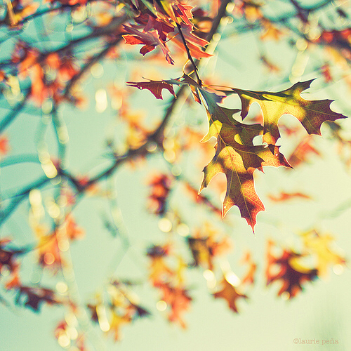 autumn fall leaves love image 2312995 by lauralai on