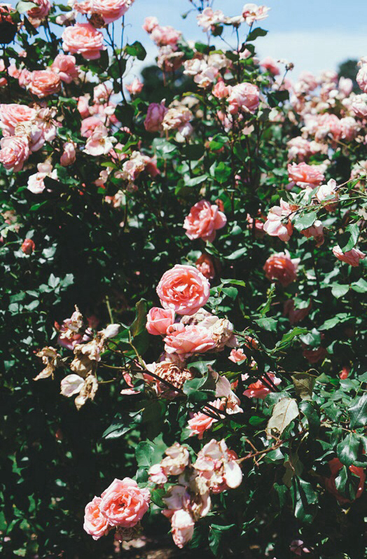 clouds, flower, flowers, hipster, indie, iphone wallpaper ... Hipster Flower Background Tumblr