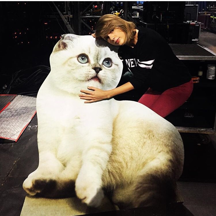 cat and taylor swift