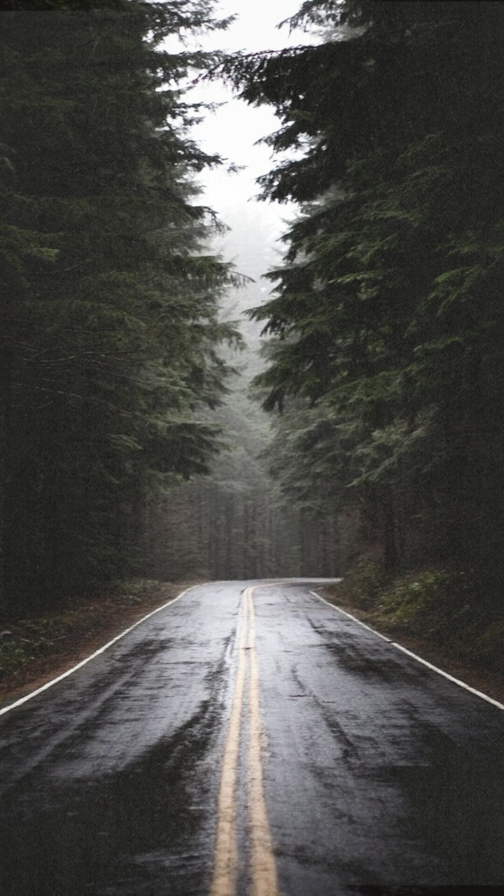 Road In A Forest Image 3627255 By Marine21 On Favimcom