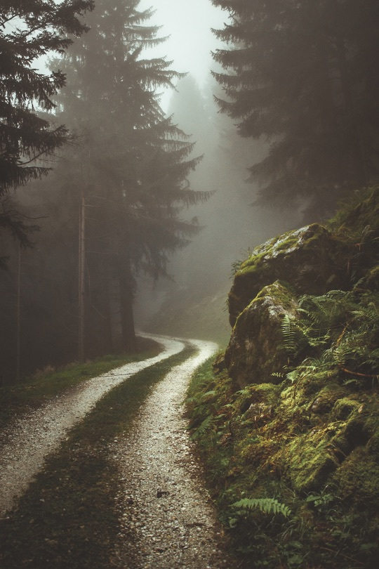 beauty, dark, green, hipster, indie, landscape, mist, nature, path, road, travel, trees, tumblr