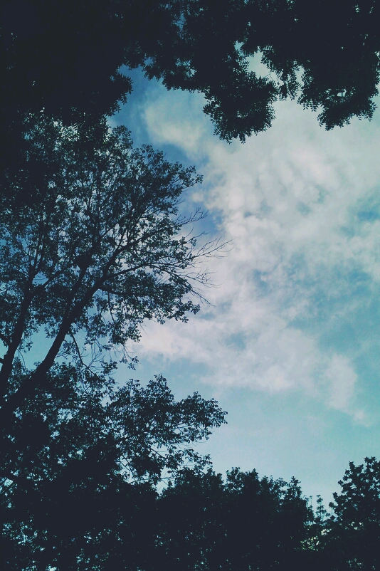 background, black, blue, boho, clouds, dark, nature, pale, photography, silhouette, sky, summer, tree, wallpaper, white