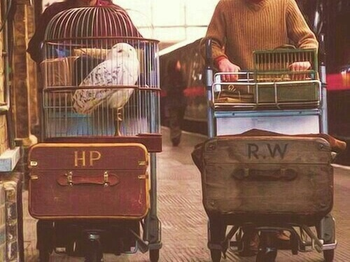 bird, books, harry potter and hedwig