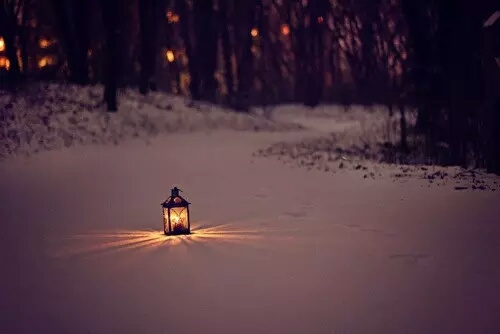 cold, forest, lantern and lights