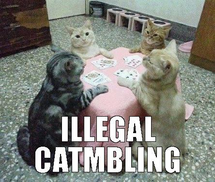 funny cats, meow, cats playing poker and poker cats