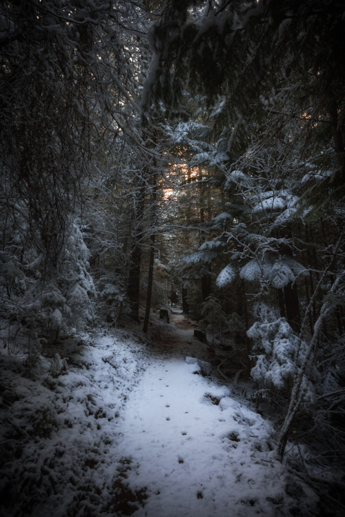 dark, forest, holiday, light, path, peek, photography, roads, robert frost, snow, sun, travel, trees, tumblr, snowy forest