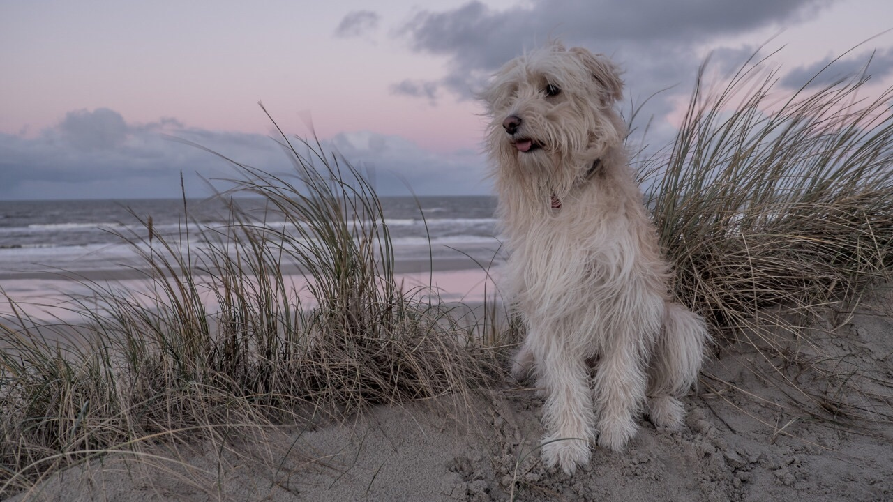 aesthetic, animals, beach, beautiful, blue, boys, cat, clouds, colors, cute, dark, dog, grey, grunge, hill, hipster, light, lilac, love, pale, pink, sad, sand, sea, sky, space, stars, sunset, tumblr, white