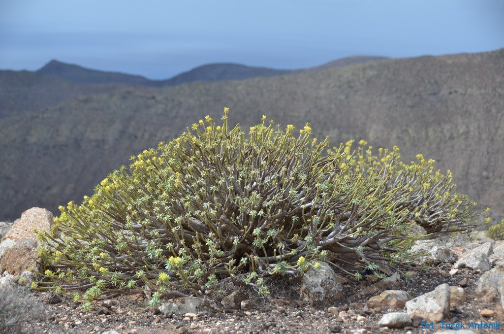 Pico de la Zarza Fuerteventura 2011 | Jacek Antonik