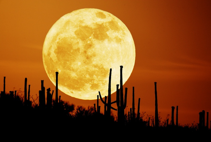APOD: 2007 September 26 - Saguaro Moon