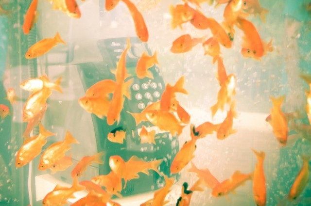 Fish Tank Phone – Fubiz™
