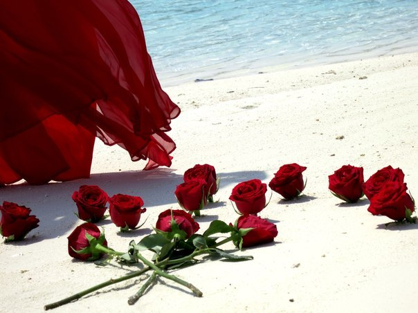 adiga, red, roses, flowers, sand