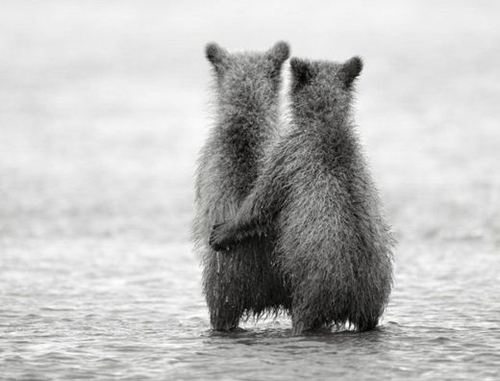 adorable, babies, bear cubs, bears, black and white