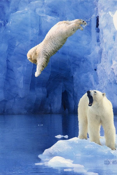 animal, bear, jump