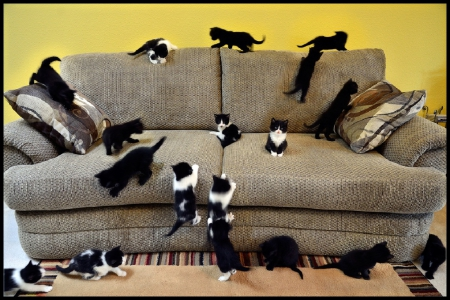 animals, cats, couch, kittens