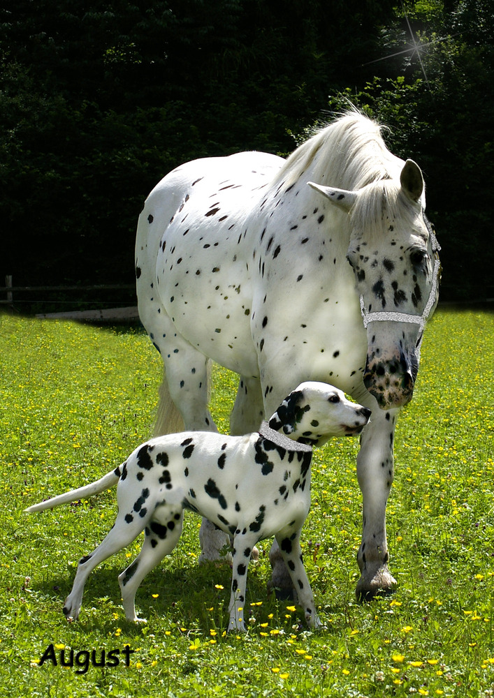 animals, cute, funny, dog, horse