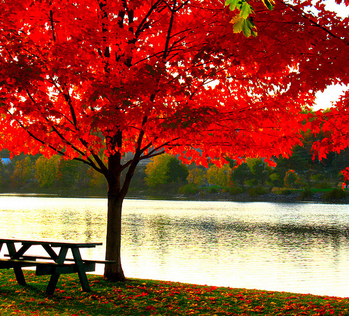 autumn, beautiful, nice, orange, red