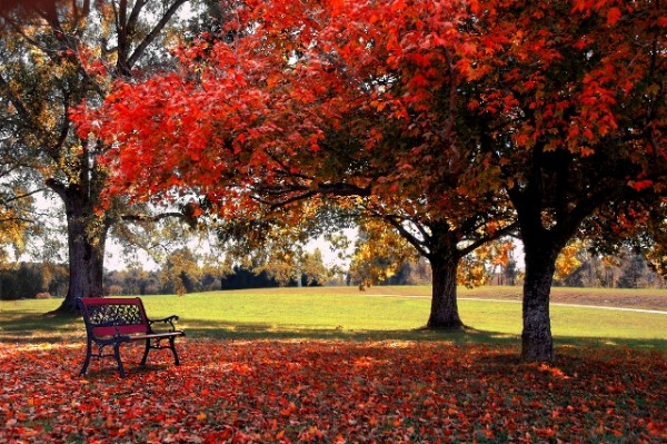 autumn beauty nature photography photos red wallpapers
