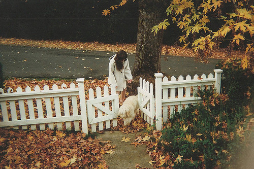 autumn, dog, fall, fence, girl