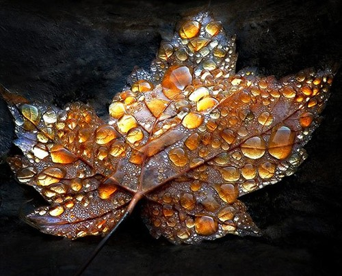 autumn, fall, leaves, color, raindrops - image #542975 on ...