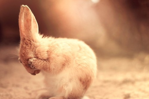bathing, bunny, cute, cuteness, love, rabbit, small, sweet, sweetness