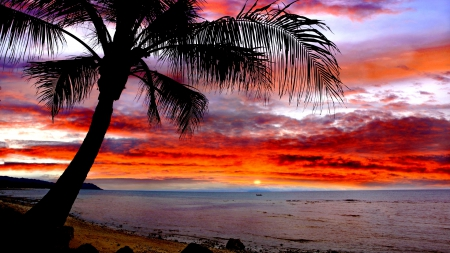 beach, palm, sunset, tree, tropic