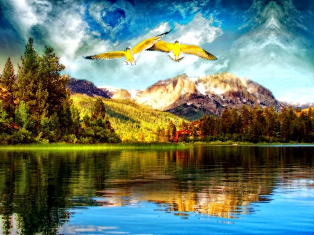 beautiful, birds, blue, clouds