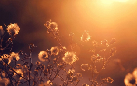 beautiful, bokeh, field, sunlight