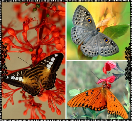 beautiful, butterflies, collage, pretty