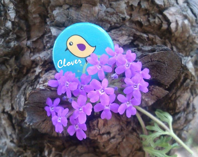 beautiful, violet, bird, love bird, pin