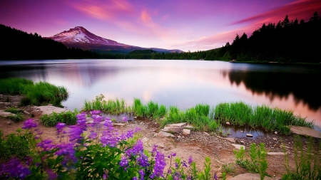 beauty, calm, flowers, lake, mountains