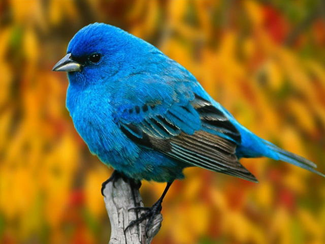 animal, bird and blue