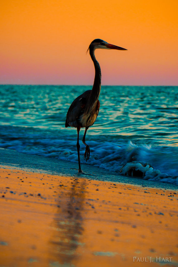 bird, birds, water, beach, skyline