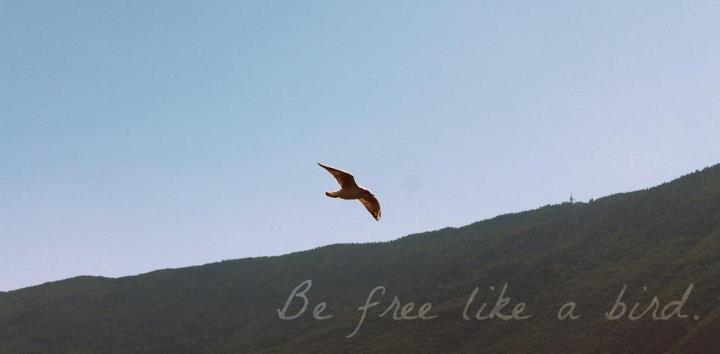 bird fly free freedom flight be like sky blue mountain