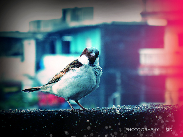 adorable, awesome, bird and blue