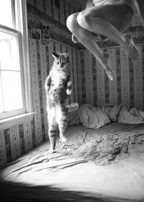 black and white, cat, jumps, bed, girl