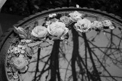 black and white, floating, pond, roses, water