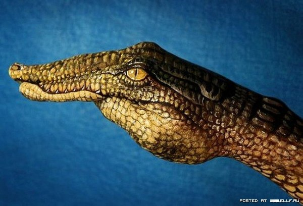 animal, bodyart, crocodile, hand