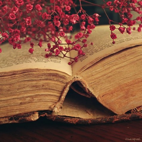 book, pages, flower, rose