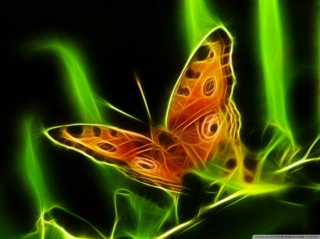 butterfly, glow, green, orange