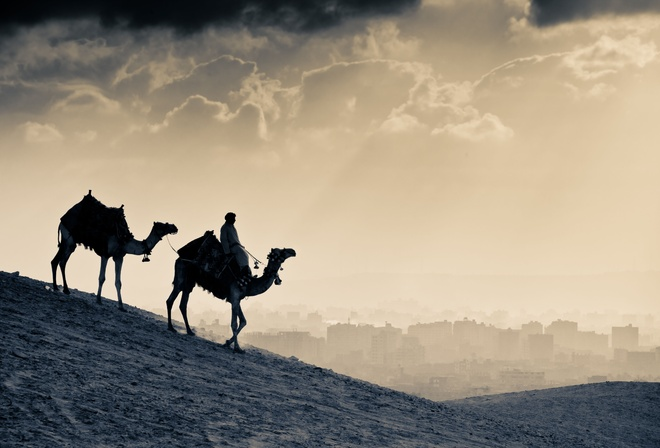 camel, the silhouette, a man