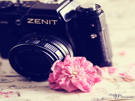 camera, memories, pink, pink rose