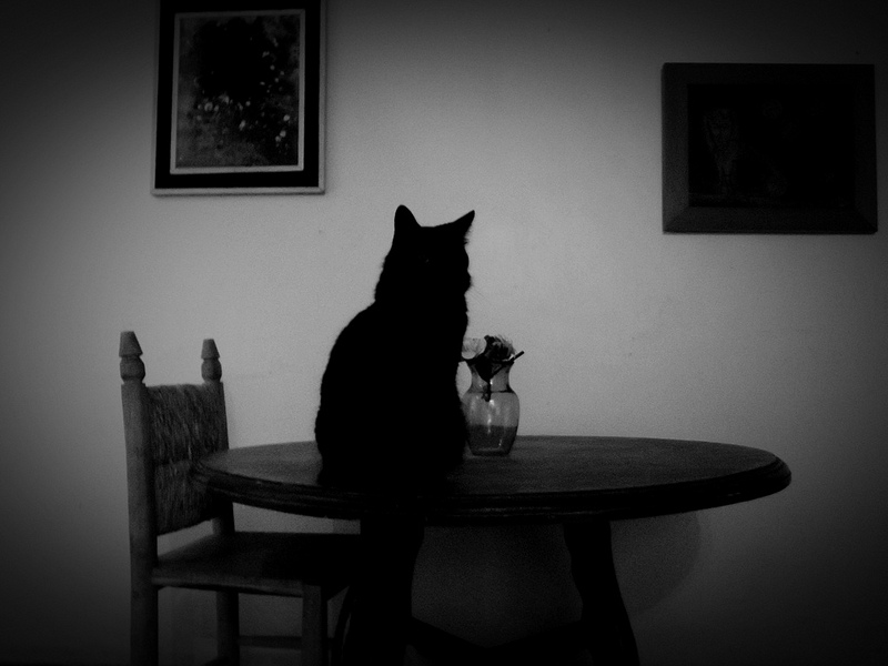 cat, black, table, chair, pretty