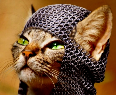 cat, chainmail, cute, funny, hat