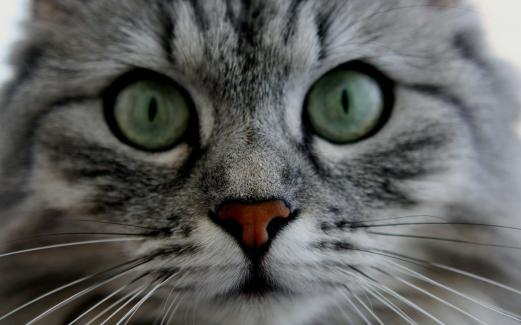 cat, eyes, whiskers