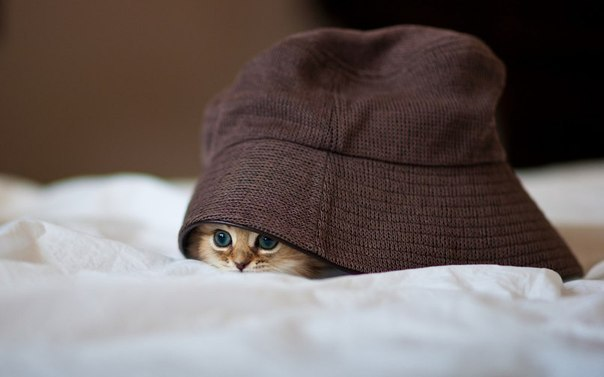 cat, kitty, hat, cute